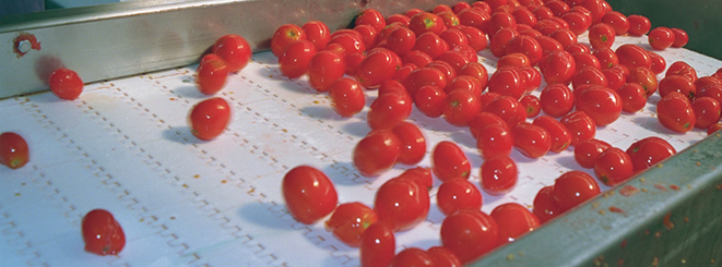 Ứng dụng của băng tải xích nhựa và băng tải modular trong ngành hoa quả